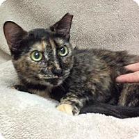 Adopt A Pet :: Alice - Tampa, FL
