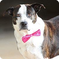 Adopt A Pet :: Rosie - Greenville, SC