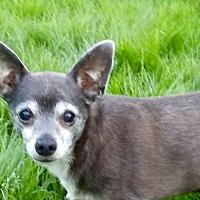 Adopt A Pet :: Taco - New Kensington, PA
