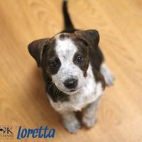 Adopt A Pet :: Loretta - Oklahoma City, OK