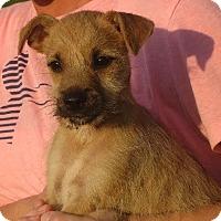 Adopt A Pet :: Chen - Westport, CT