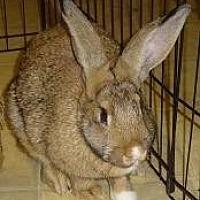 Adopt A Pet :: Clover - Woburn, MA