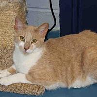 Adopt A Pet :: URZA - Hampton Bays, NY