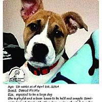 Adopt A Pet :: Brooklyn - Ortonville, MI
