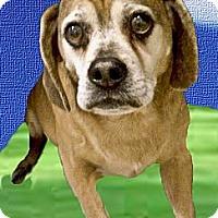 Adopt A Pet :: Oden URGENT - Sacramento, CA