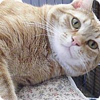 Adopt A Pet :: Rascal - Newburgh, NY