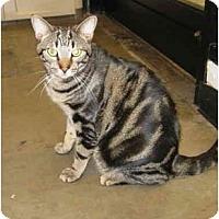 Adopt A Pet :: Ricky - Mesa, AZ