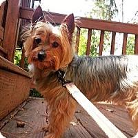 Adopt A Pet :: Noodles - Suwanee, GA