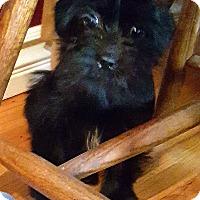 Adopt A Pet :: GILLIAN - Winnetka, CA