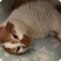 Adopt A Pet :: Charlie - Chesapeake, VA