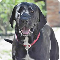 Adopt A Pet :: Bubba - Ormond Beach, FL