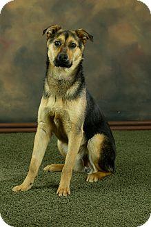 German Shepherd Dog/Husky Mix Puppy for adoption in Anchorage, Alaska - Henry