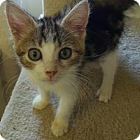 Adopt A Pet :: DASH! - Owenboro, KY