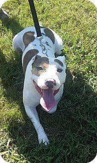 Terrier (Unknown Type, Medium) Mix Dog for adoption in Williamsburg, Virginia - Tater