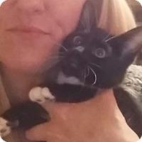 Adopt A Pet :: Harriett - North Highlands, CA