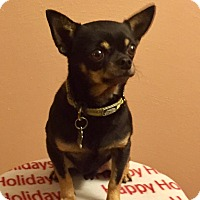 Adopt A Pet :: Tiny Nick ADOPTED!! - Lynnwood, WA