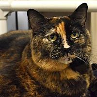 Adopt A Pet :: Muffin - Edmonton, AB