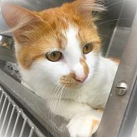 Adopt A Pet :: Jameson - Webster, MA