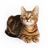 Adopt A Pet :: Bishop - New York, NY