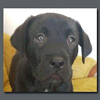 Adopt A Pet :: Tyler Texas - Wakefield, RI