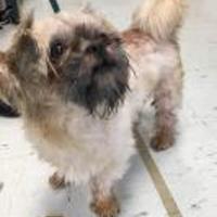 Adopt A Pet :: Professor - Fairfax Station, VA