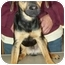 Photo 2 - Shepherd (Unknown Type) Mix Puppy for adoption in North Judson, Indiana - MaGoo