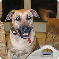 Adopt A Pet :: Millie - Richland, MI