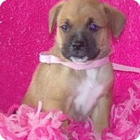 Adopt A Pet :: Jane - Phillips, WI