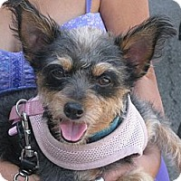 Adopt A Pet :: Rosebud - Culver City, CA