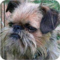 Adopt A Pet :: MAVERICK in Mesa, AZ. - Mesa, AZ