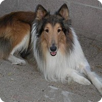 Adopt A Pet :: King - Riverside, CA