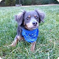 Adopt A Pet :: Luke - Mocksville, NC