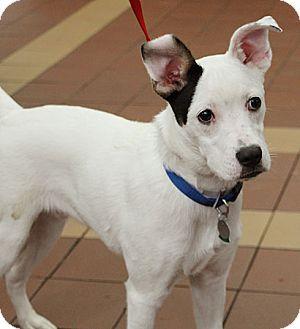 Terrier (Unknown Type, Medium)/Border Collie Mix Dog for adoption in Port Washington, New York - Sonar