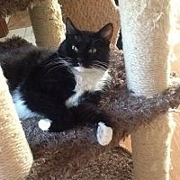 Adopt A Pet :: Anna - Davison, MI