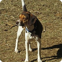 Adopt A Pet :: REESE - Lincolndale, NY