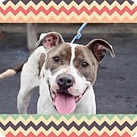 Adopt A Pet :: Roxanne - Memphis, TN