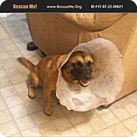 Adopt A Pet :: Sasha - LaBelle, FL