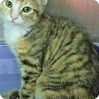 Adopt A Pet :: Mulan - Port Clinton, OH