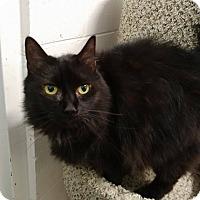 Adopt A Pet :: Pearl - Umatilla, FL