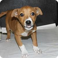 Adopt A Pet :: Nip - Philadelphia, PA