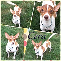 Adopt A Pet :: Cera 7 pounds! - Genoa City, WI