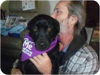Hound (Unknown Type) Mix Dog for adoption in Cincinnati, Ohio - Jake