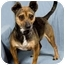 Photo 3 - Chihuahua Mix Dog for adoption in Anna, Illinois - QUEEN