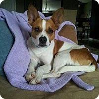 Adopt A Pet :: Alex - North Wales, PA