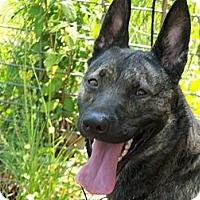 Adopt A Pet :: Demi in TX - Jamestown, CA