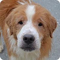 Adopt A Pet :: Memphis - White River Junction, VT