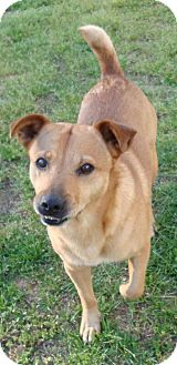 Labrador Retriever Mix Dog for adoption in Decatur, Georgia - Lil Boy