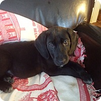 Adopt A Pet :: Summer - Cumming, GA