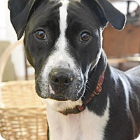 Adopt A Pet :: Shadow - Knoxville, TN