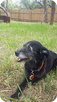 Terrier (Unknown Type, Medium) Mix Dog for adoption in Austin, Texas - Summer